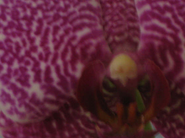 My Favorite Orchid