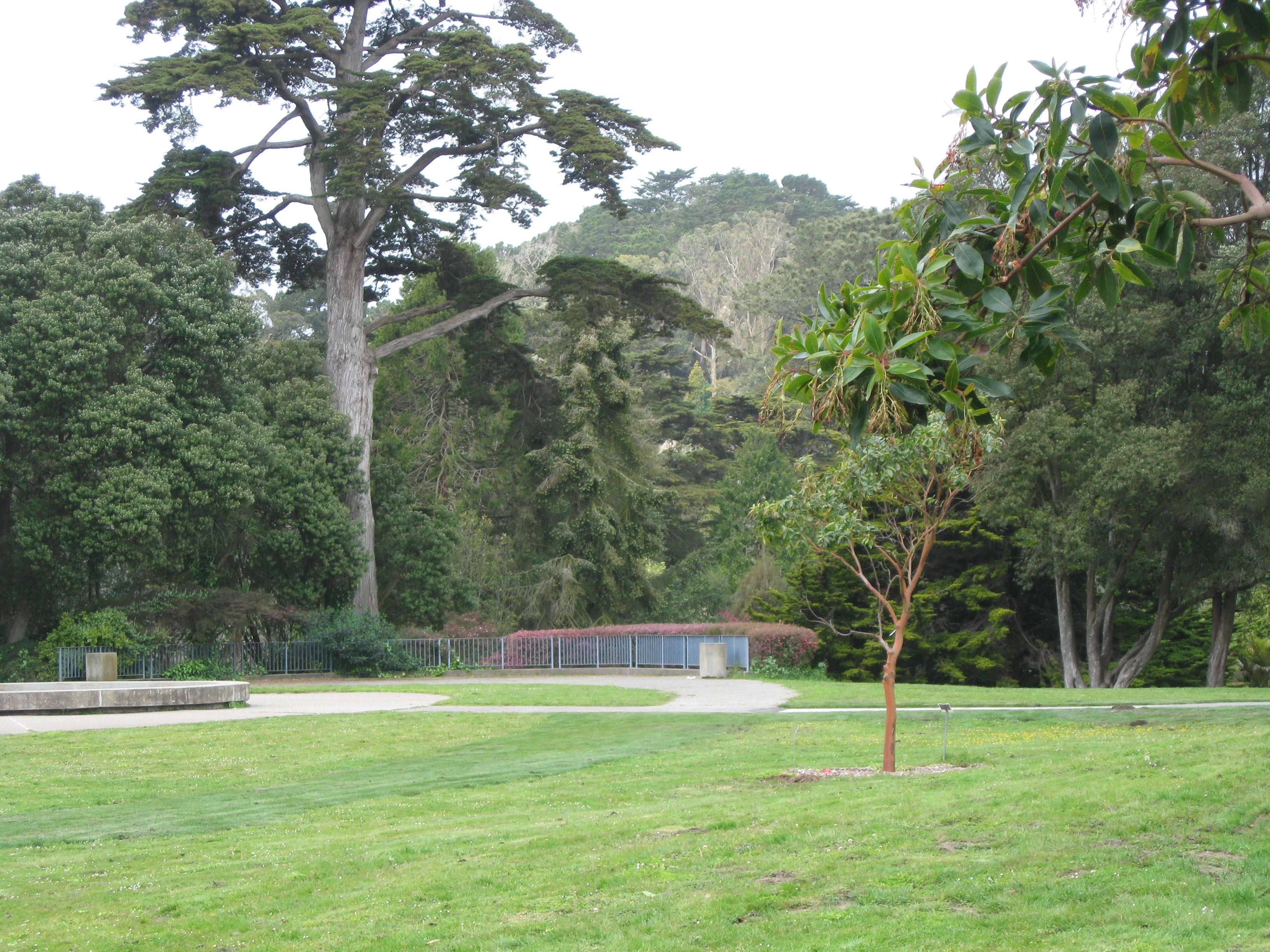 The Wide Open Spaces Of The Garden. The San Francisco Botanical Garden Is  An Unlikely Spot ...