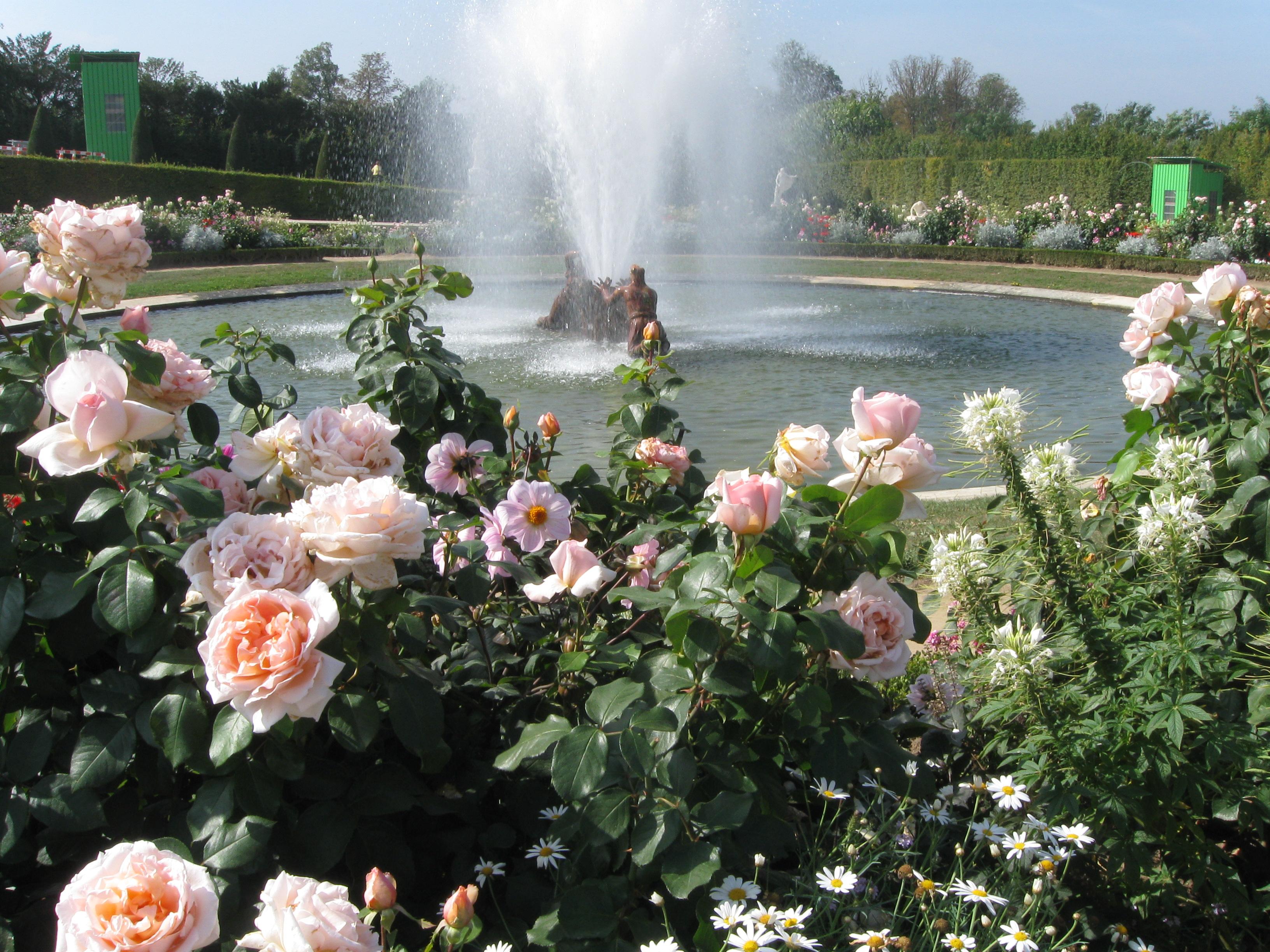 Roses In Garden: Gwendolyn's Garden